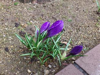 春の花2.JPG